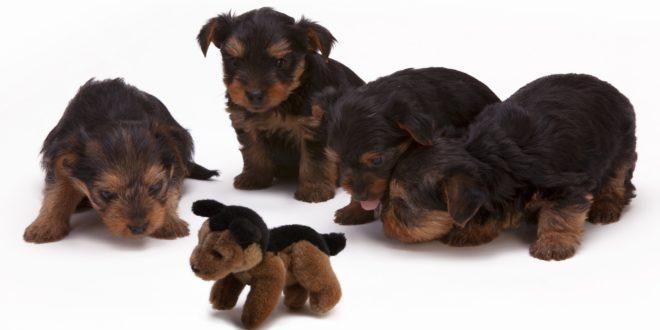 PeTA Explains Animal Rights (Part III)